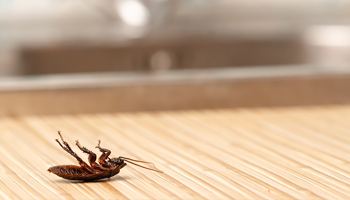 Cockroach Removal Rotorua - Bay Pest Services
