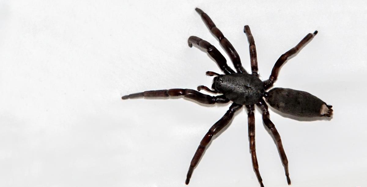 Spider Removal Bay of Plenty - Spiders
